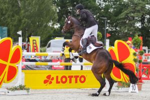 3DE Show Jumping Phase Stock 26 - horse 18yrs old! by LuDa-Stock
