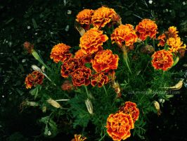 Orange Flowers by saturn-rings