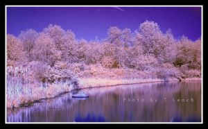 Silver Creek Serenity by tleach0608