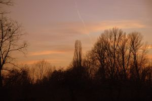 Sunset behind the trees by adamsik