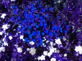 Alice's flowers by ophelia1022