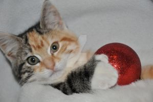 christmas kitten :heart: by fallingangel1983