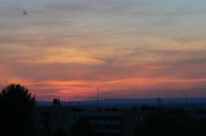 Swifts at sunset by estachos