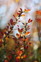 Autumn Imressions by Justine1985