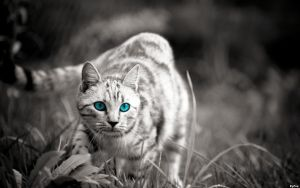EgFox CAT 2- 2011 HD by Eg-Art