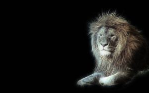 Lion Fractal by christara