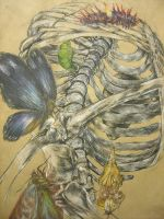 Butterfly Skeleton by Nanidanides