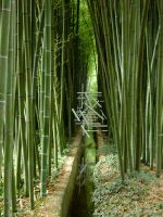 Bamboo 01 by Emystick-stocks