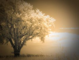 Tree of Summer Dreams by Pennes-from-Heaven