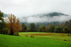 Line of Fog in Autumn by TimLaSure