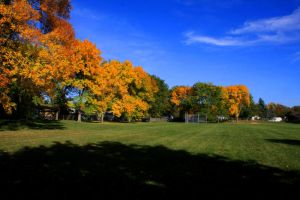 In Comes Fall by olearysfunphotos