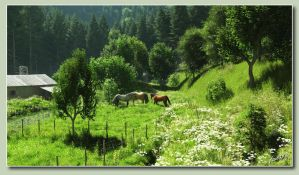 Green Pastures by neanderdigital