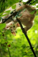 kitten up a tree by Paranoid-Duckkie