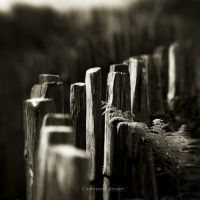 Carteret story VII... by Kaarmen