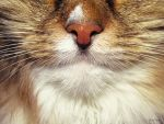Cat Detail by EveVictus