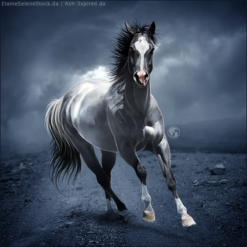 HEE Horse Avatar - Storm Warning by art-equine