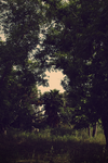 Clouded by Leaves single by AlonDiviX