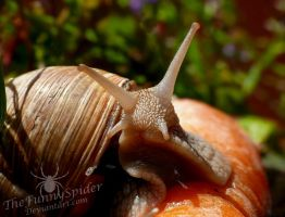 Another cute Snail Portrait by TheFunnySpider