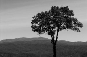 TReE by Duratec