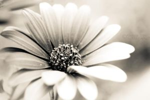 Pureness by Alessia-Izzo