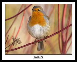 ROBIN by THEDOC4