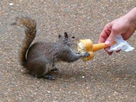 Squirrel eating icecream by JanuaryGuest