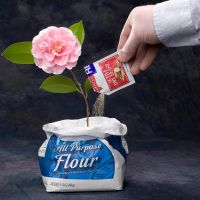 Flour + Yeast -- Flower by FireAwayphoto
