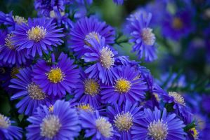 Early Automn Flowers by inacom