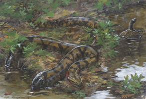 Domain of Titanoboa by tuomaskoivurinne