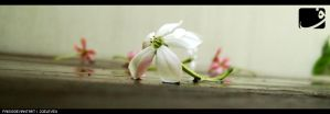 rangoon.flower.3 by faiis