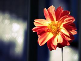Flower for You by Juandii