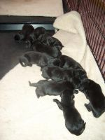 A Litter of 10 by jurei
