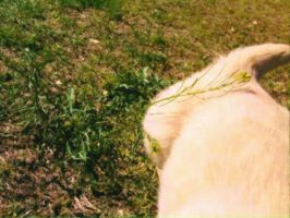 dog playing in grass by eugenio1