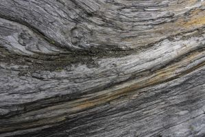 Weathered tree texture I by ArtistStock