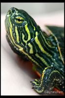 Baby Pond Turtle by UffdaGreg