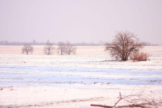 Winter 2012 - 22 by Eufrosis