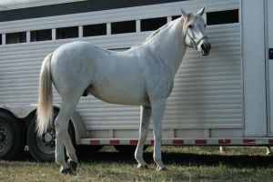 andalusian stock 3 by xbr0kendevotion