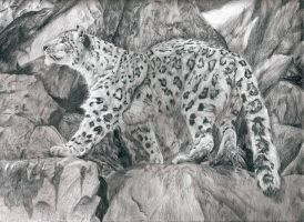 Snow Leopard by Lycanthrope818