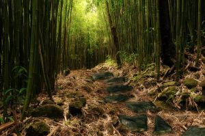 Bamboo Premade Background by KarahRobinson-Art