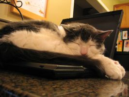 Adobe Laptop 2 by cat-lovers