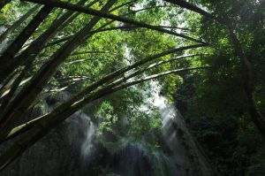 Bamboo at the Falls by aperture24