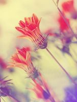 Spring Wishes.. by pacificdreams