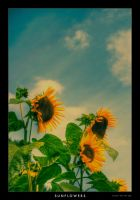 sunflowers by guality