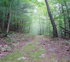 Forest Path (stock)3September 23, 2013 by RustedScrapMetal