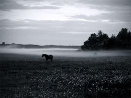 fog III by BrokenLens