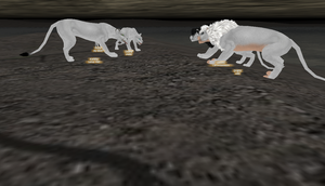 DANCE of white lions by TNT-DOG