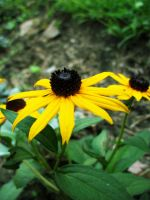 Yellow flower by pety-ytep