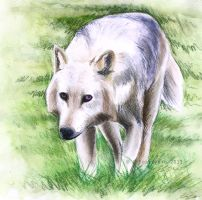 A wolf for a friend by Hobbitato