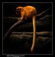 Hogle Zoo by artisticallylearning