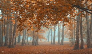 Made for walk by ildiko-neer